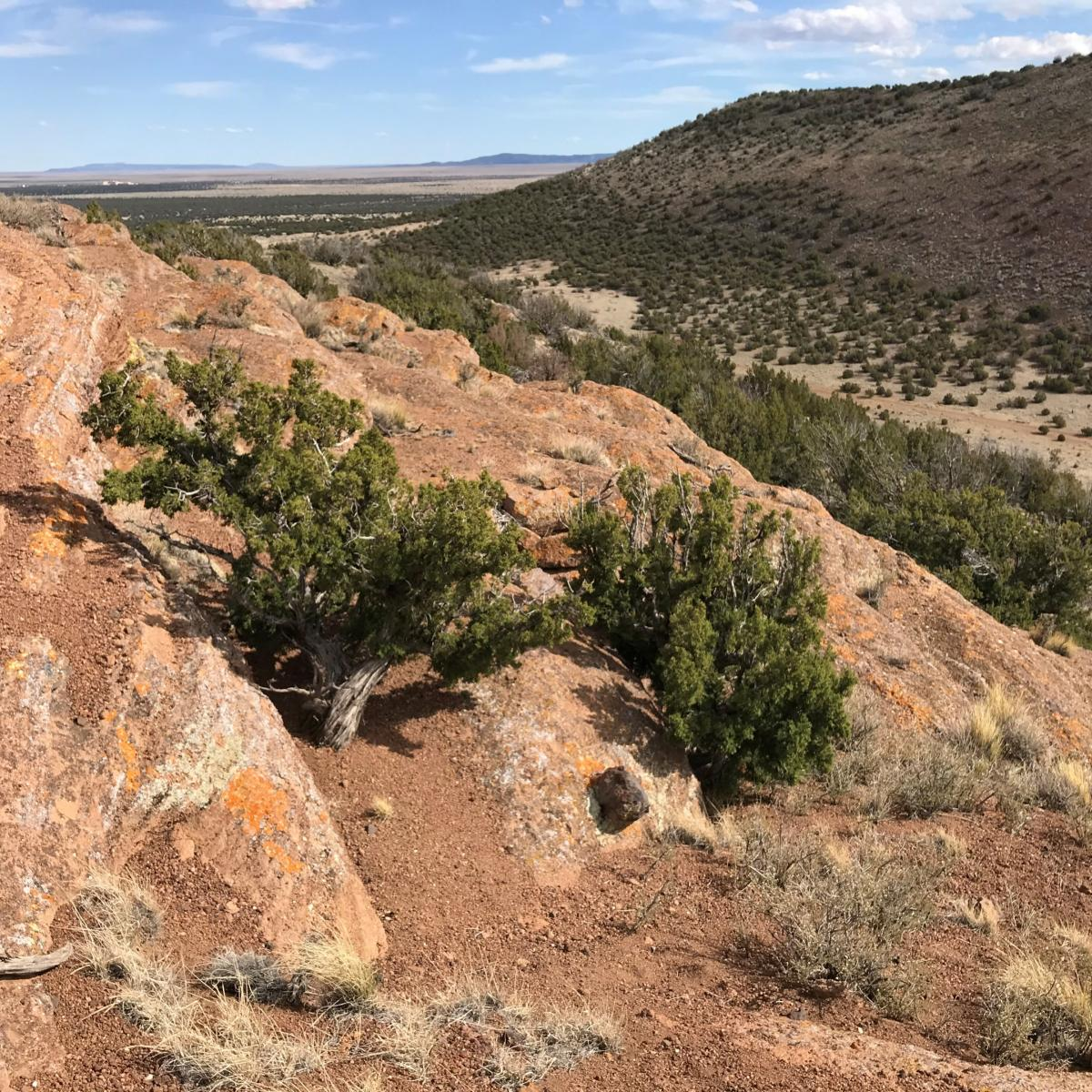 On the outer flanks of Rattlesnake Crater maar