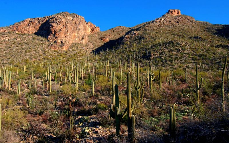 Pima Canyon, Santa Catalina Mountains